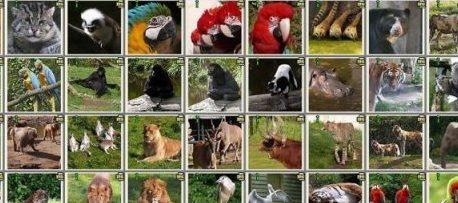 Les animaux d'ici et d'ailleurs-  Thématique 2020